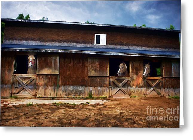 Three Horses In A Barn Greeting Card by Dan Friend