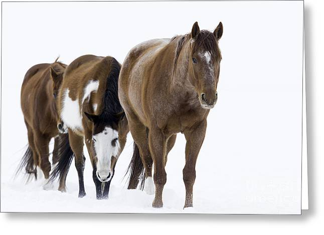 Three Horses Walking Through The Snow Greeting Card by Carol Walker