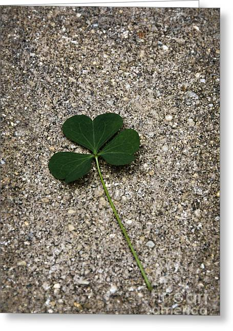 Three Leaf Clover Greeting Card