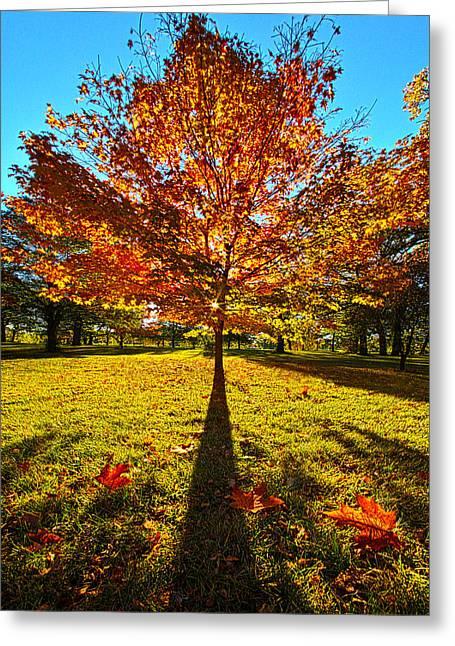 Three Leaves Down Greeting Card by Phil Koch