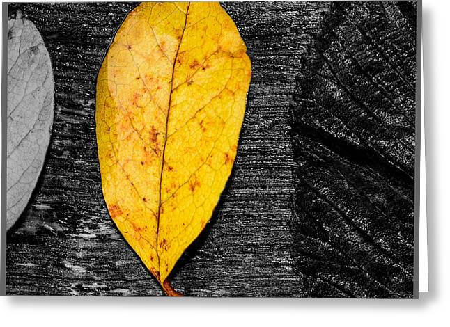Three Leaves On Wood Texture Greeting Card by Tommytechno Sweden