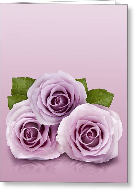 Three Lilac Roses Greeting Card