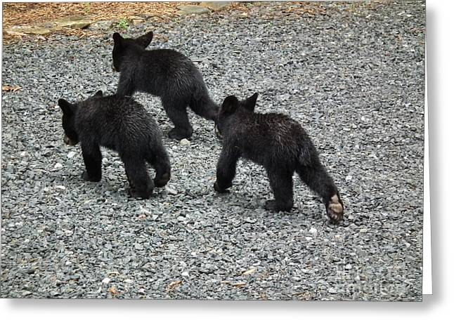 Three Little Bears In Step Greeting Card by Jan Dappen