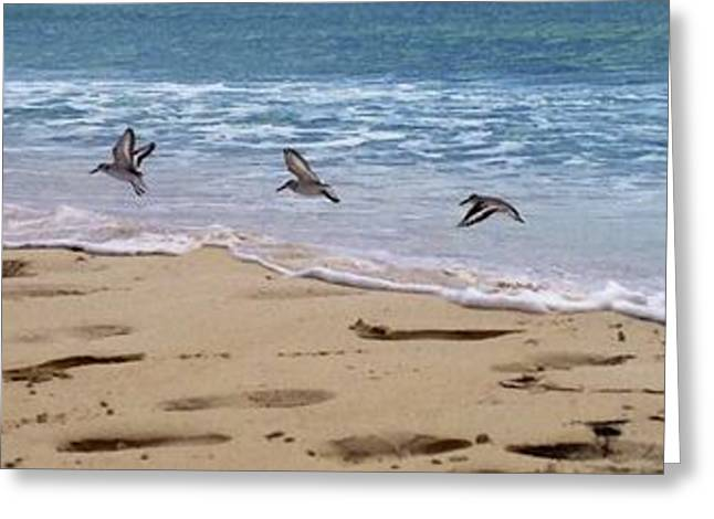 Three Little Birds In Anguilla Greeting Card