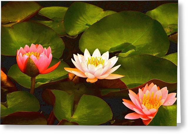 Three Lovely Gracious Waterlilies Greeting Card by Byron Varvarigos