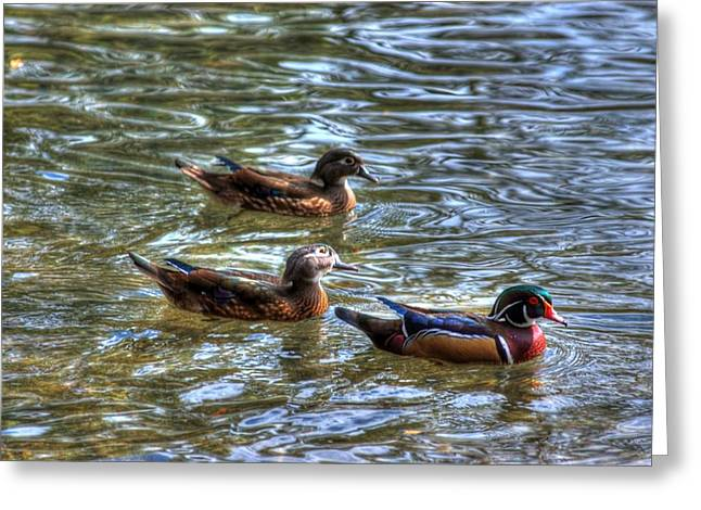 Three Mallard Ducks Greeting Card