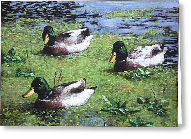 Three Mallard Ducks In Pond Greeting Card by Martin Davey