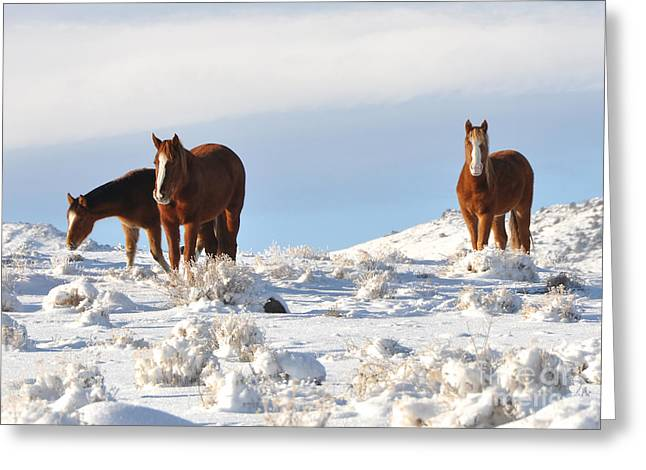 Three Mustangs In Snow Greeting Card