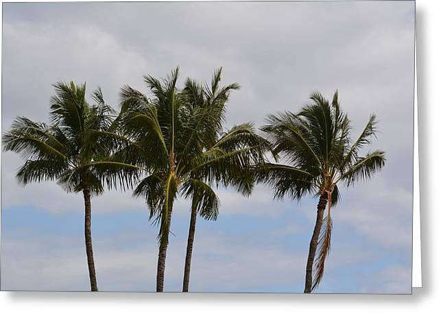 Three Palm Trees Greeting Card by P S