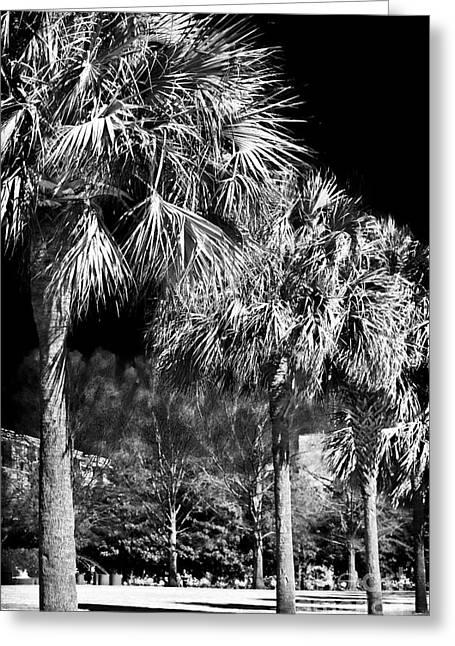 Three Palms In Charleston Greeting Card by John Rizzuto