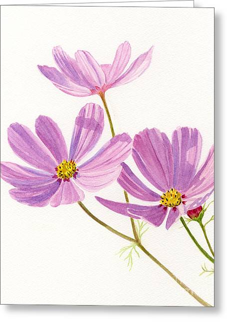 Three Pink Cosmos Blossoms Greeting Card by Sharon Freeman