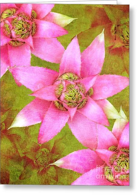 Three Pink Ladies Greeting Card by Claudia Ellis