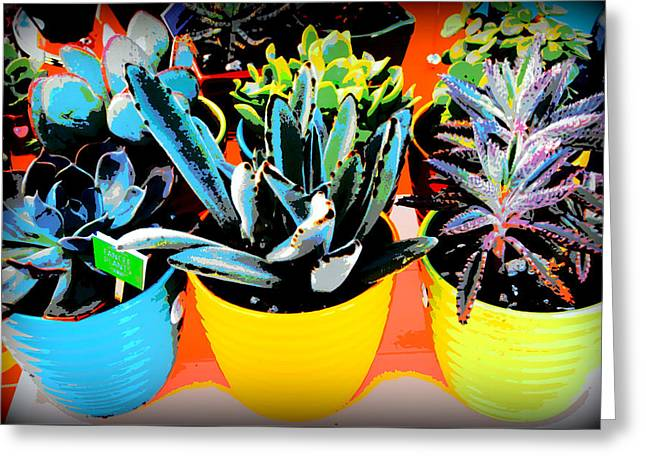 Three Potted Plants Greeting Card by Karyn Robinson