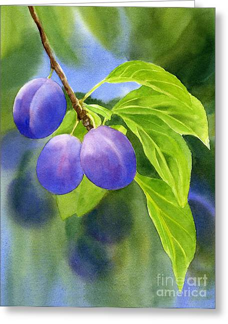 Three Purple Plums With Background Greeting Card by Sharon Freeman