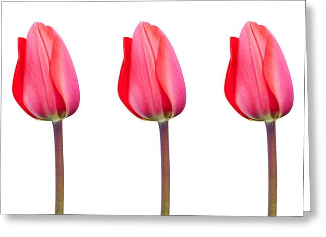 Three Red Tulips In A Row Greeting Card by Natalie Kinnear