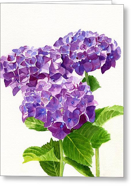 Three Red Violet Hydrangea Blossoms Greeting Card by Sharon Freeman