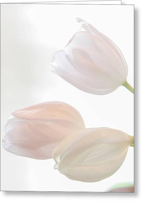 Three Sisters Greeting Card