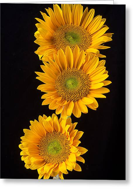 Three Stacked Sunflowers Greeting Card by Garry Gay