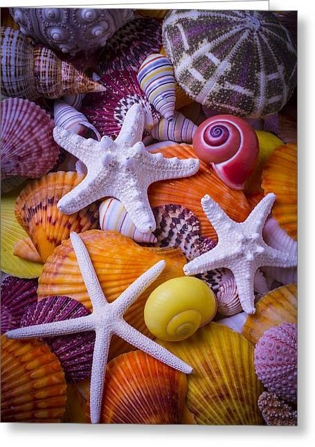 Three Starfish Greeting Card by Garry Gay