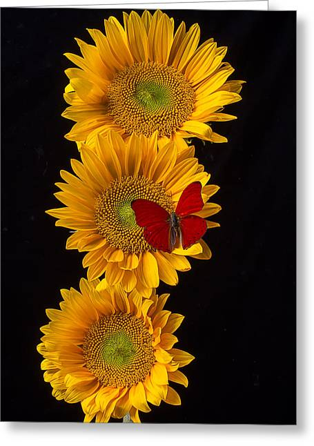 Three Sunflowers With Red Butterfly Greeting Card by Garry Gay