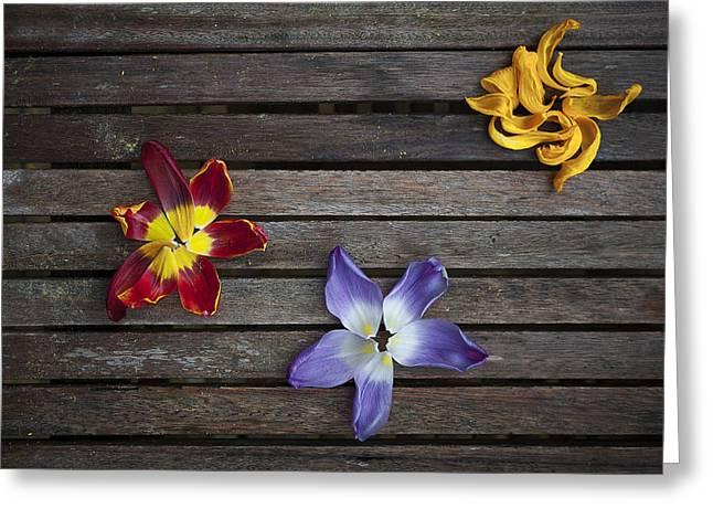 Three Greeting Card by Svetlana Sewell