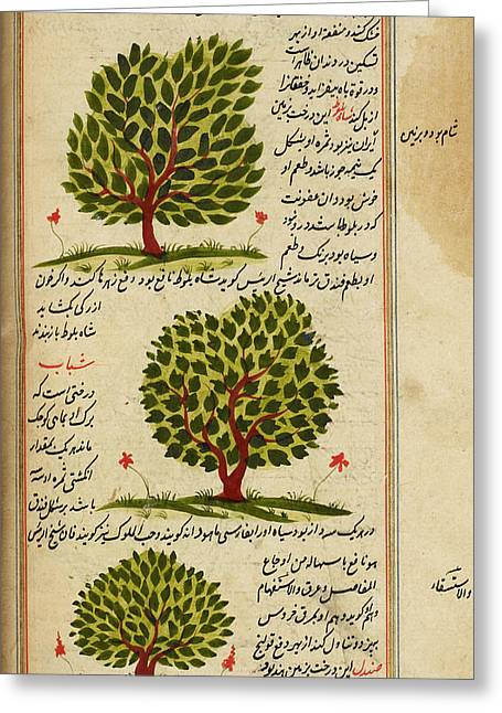 Three Trees Greeting Card by British Library