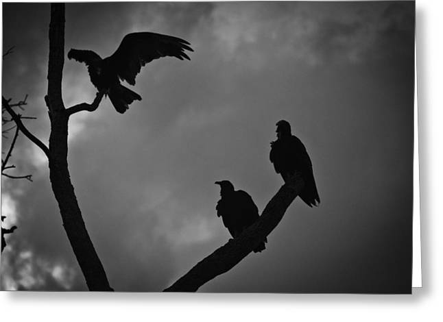 Three Vultures Greeting Card by Bradley R Youngberg