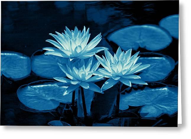 Three Water Lilies In Cyan Greeting Card by Linda Phelps