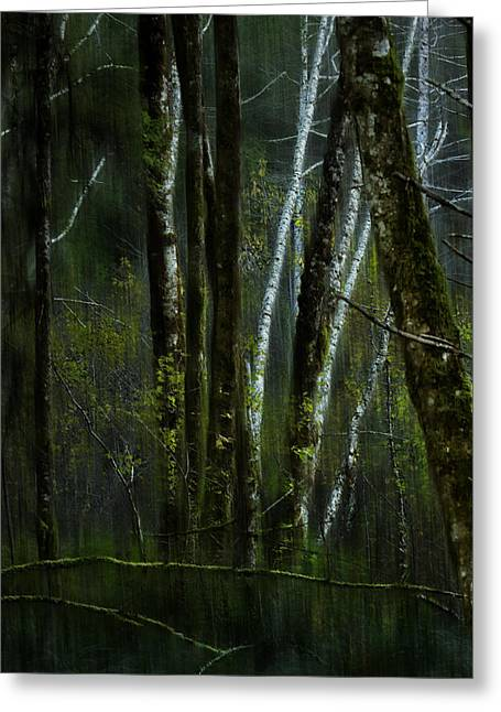 Greeting Card featuring the photograph Through A Glass . . . Darkly by Belinda Greb