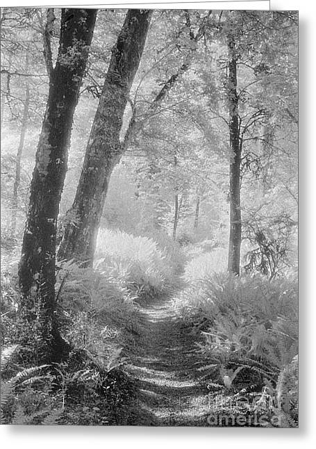 Through The Bush Greeting Card by Colin and Linda McKie