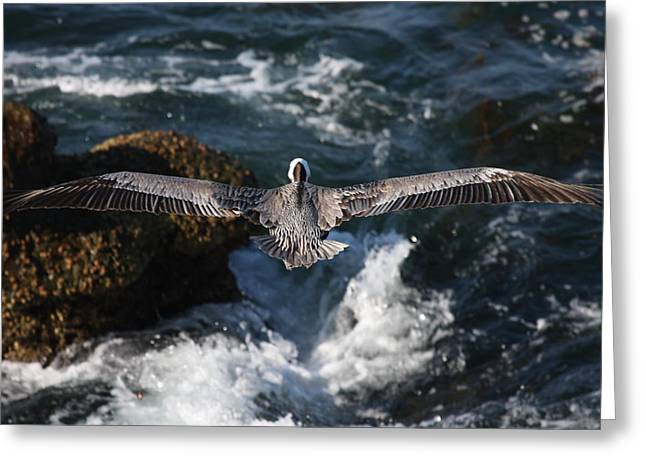 Greeting Card featuring the photograph Through The Eyes Of A Pelican by Nathan Rupert