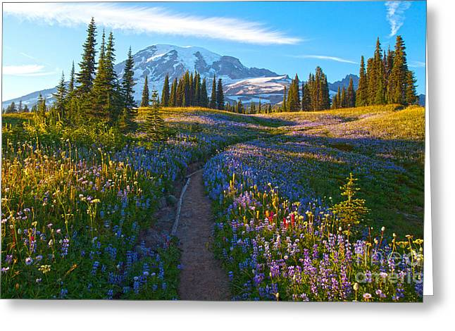 Through The Golden Meadows Greeting Card by Mike Reid