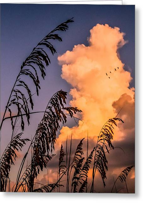 Through The Grass Greeting Card by Zina Stromberg