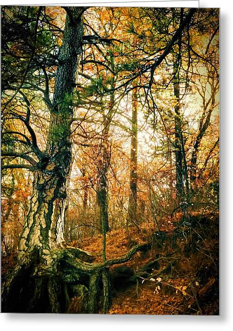 Through The Island Forest Greeting Card