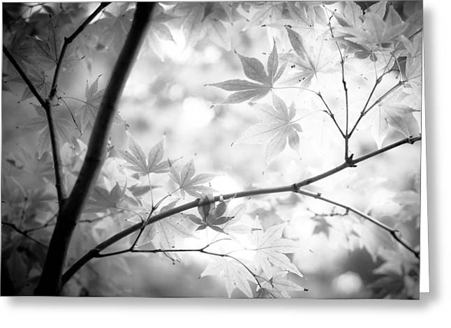 Through The Leaves Greeting Card