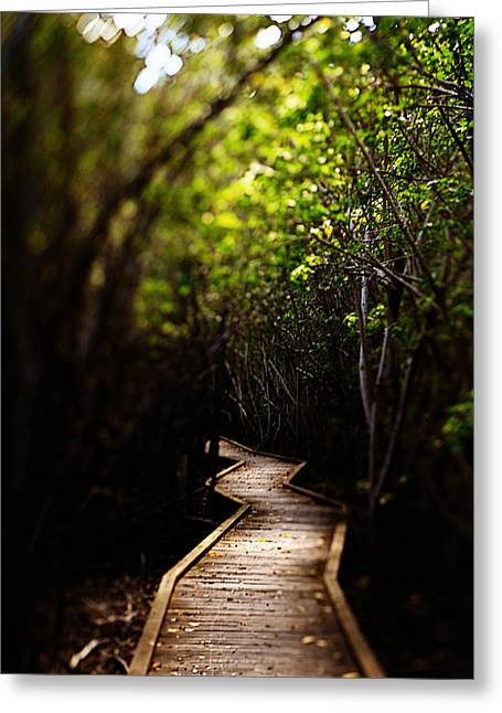 Through The Mangroves Greeting Card by Heather Green