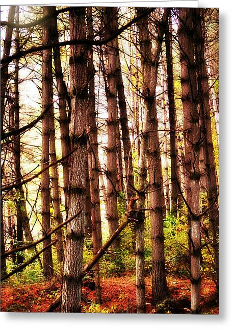 Through The Pines Greeting Card by Chastity Hoff