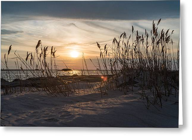 Through The Reeds Greeting Card by Kristopher Schoenleber
