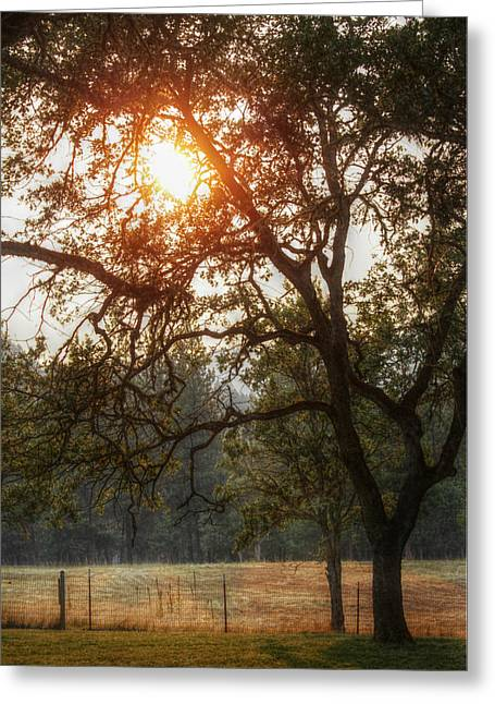 Through The Trees Greeting Card by Melanie Lankford Photography