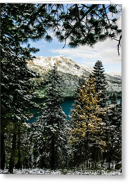 Through The Trees Greeting Card by Mitch Shindelbower