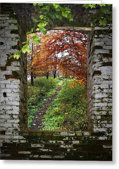 Through The Window Greeting Card by Debra and Dave Vanderlaan