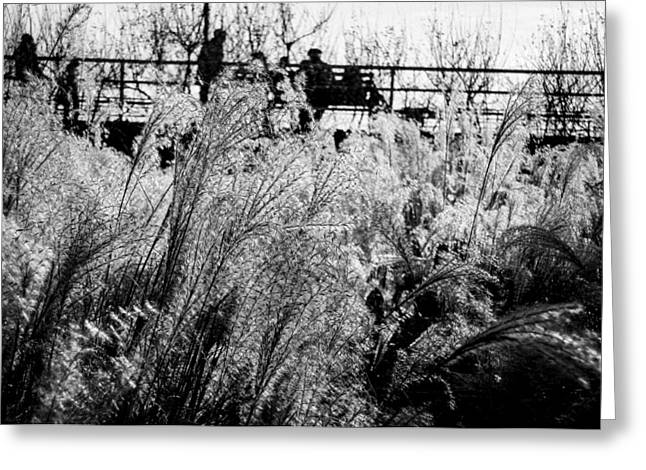 Through The Winter Grasses Greeting Card