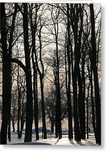 Through The Winter Trees Greeting Card by Heather Allen