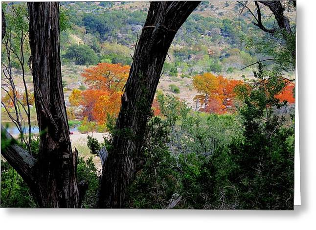 Thru The Trees Greeting Card by David  Norman