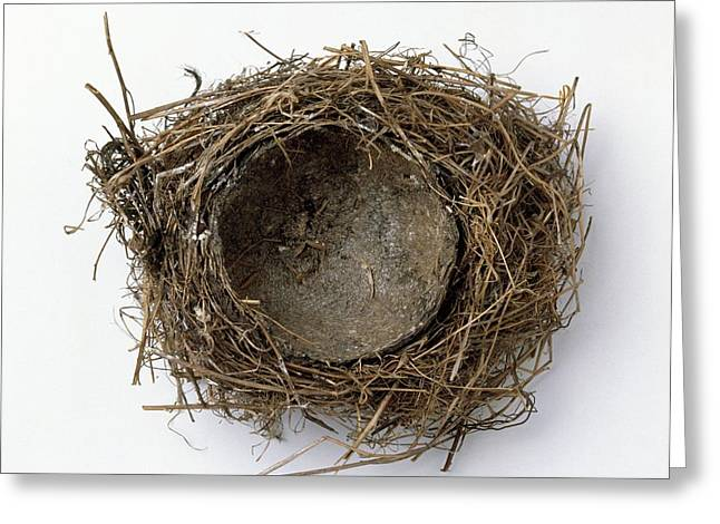 Thrush's Nest Greeting Card