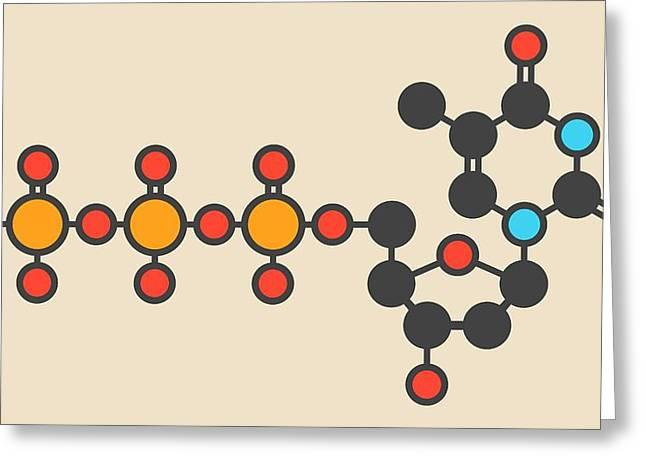 Thymidine Triphosphate Molecule Greeting Card by Molekuul