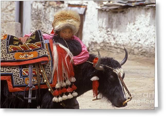 Tibetan Girl With Yak - Lhasa Tibet Greeting Card by Craig Lovell