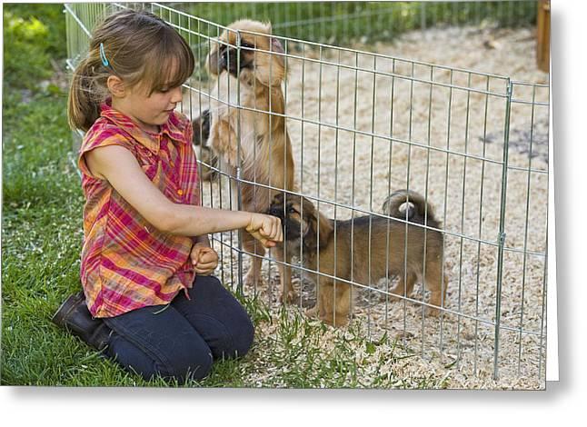 Tibetan Terriers Greeting Card by Jean-Michel Labat
