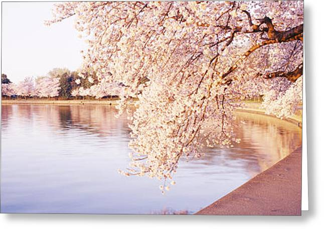 Tidal Basin, Washington Dc, District Of Greeting Card by Panoramic Images
