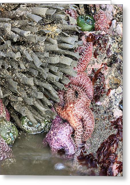 Tidal Beach With Sea Stars Greeting Card